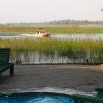 Botswana Maun Island Safari Lodge Pool Iwanowskis Reisen - afrika.de