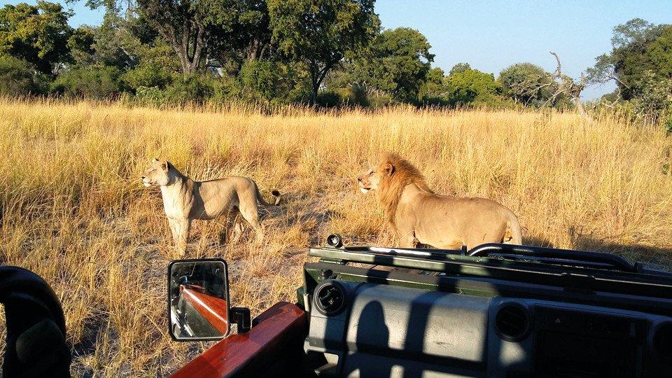 Botswana Okavango Delta Kadizora Camp Pirschfahrt Iwanowskis Reisen - afrika.de
