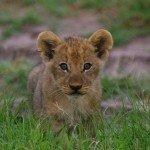 Familien-Abenteuer Botswana