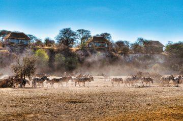 Botswana Makgadikgadi Pans National Park Leroo La Tau Zebraherde Iwanowskis Reisen - afrika.de