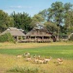 Botswana Okavango Delta Mombo Camp Iwanowskis Reisen - afrika.de