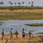 Botswana Okavango Delta Sandibe Safari Lodge Fußpirsch Iwanowskis Reisen - afrika.de