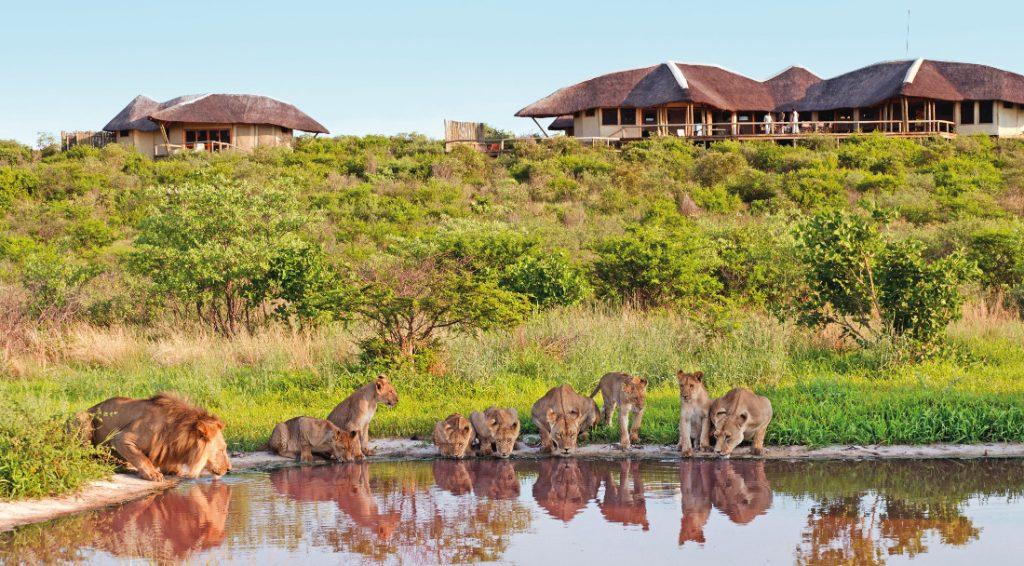 Botswana Kalahari Wildreservat Tau Pan Camp Löwen Iwanowskis Reisen - afrika.de