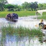 Flugsafari: Botswana Deluxe