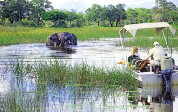 Flugsafari: Botswana under Canvas