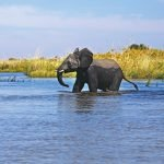Botswana Elefant Okavango Delta Iwanowskis Reisen - afrika.de