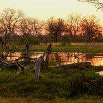 Botswana im Flug