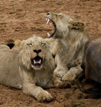 "Botswana 2015_copyright: Blog ""siswords.wordpress.com"""