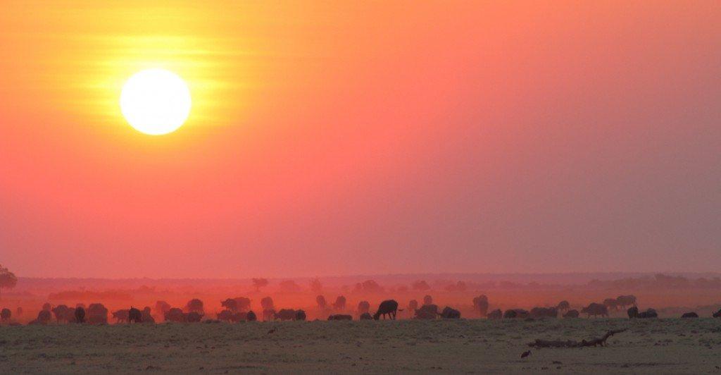Botswana_Sonnenuntergang im Chobe