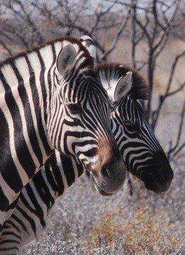 Etosha_Namibia
