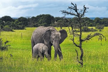 Kenia Sweetwaters Nature Reserve Elefanten Iwanowskis Reisen - afrika.de