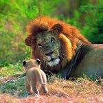 Tansania Serengeti Löwennachwuchs Iwanowskis Reisen - afrika.de