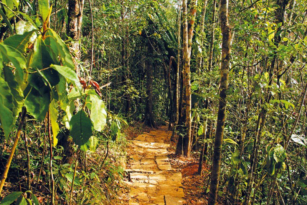 Madagaskar Andasibe Regenwald Iwanowski's Reisen - afrika.de