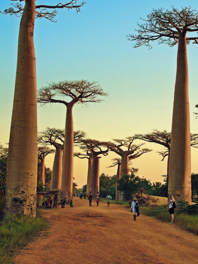 Madagaskar Baobab Allee Iwanowski's Reisen - afrika.de