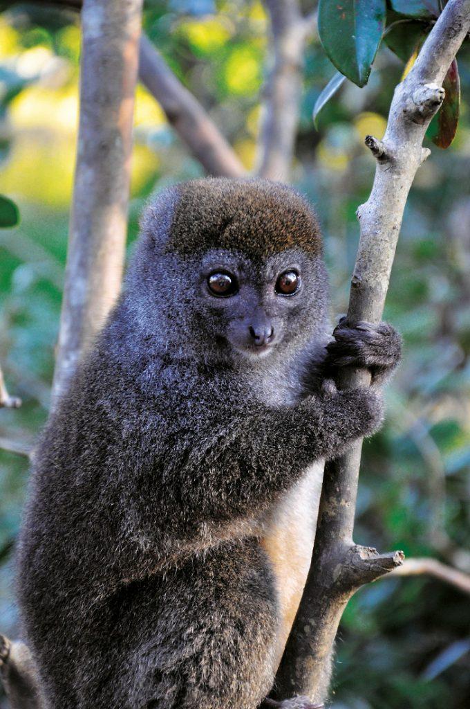 Madagaskar Rundreise Safari Lemur Iwanwoskis Reisen - afrika.de