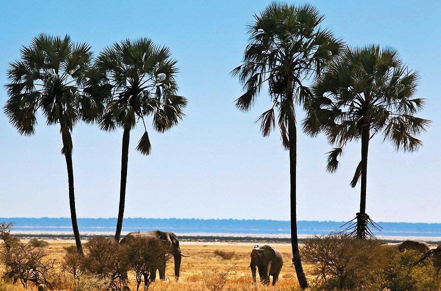 Namibia Pirschfahrt Etosha National Park Iwanowskis Reisen - afrika.de
