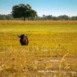 Namibias Norden & Okavango Delta