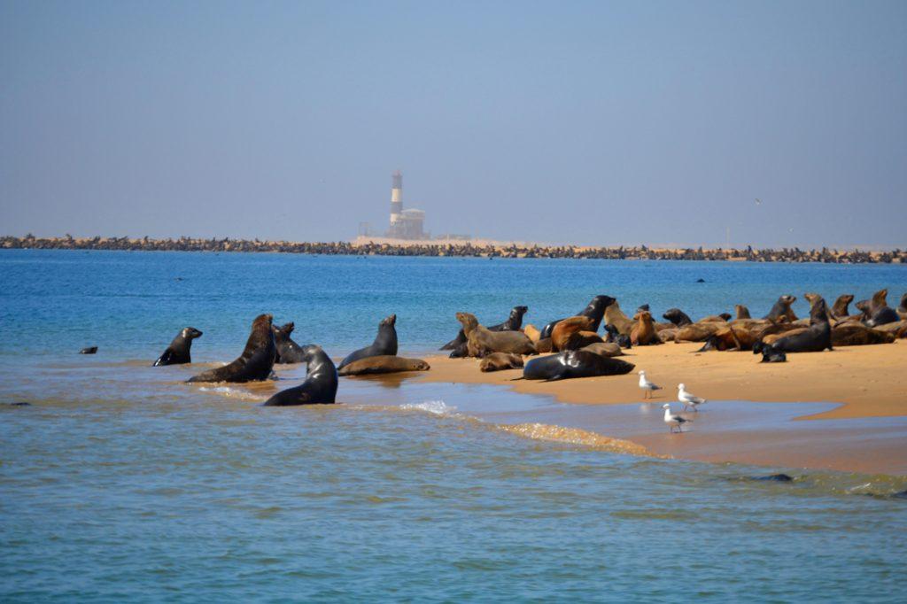 Namibia Swakopmund Bootsausflug Seehundkolonie Iwanowskis Reisen - afrika.de