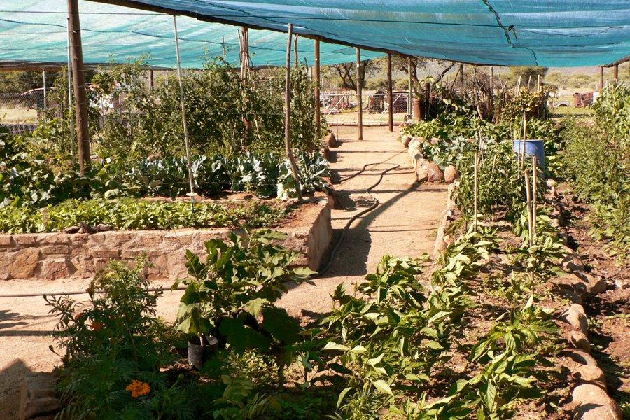 Namibia Farm Omandumba Gemüsegarten Iwanowskis Reisen - afrika.de