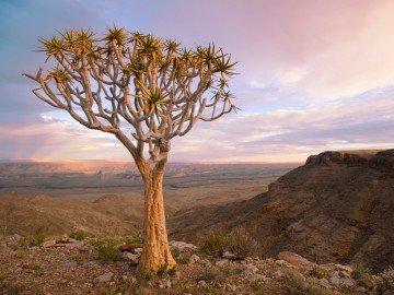 Der unberührte Westen von Südafrika bis Namibia mit dem Mietwagen