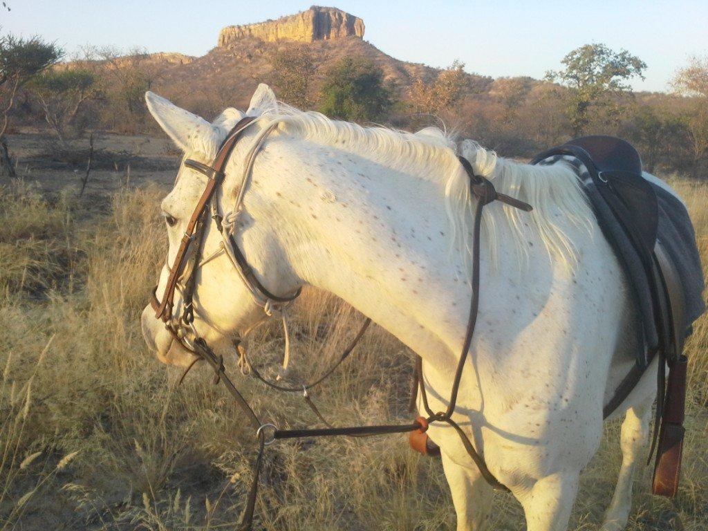Namibia Gästefarm Omburo Ost Pferd Iwanowskis Reisen - afrika.de