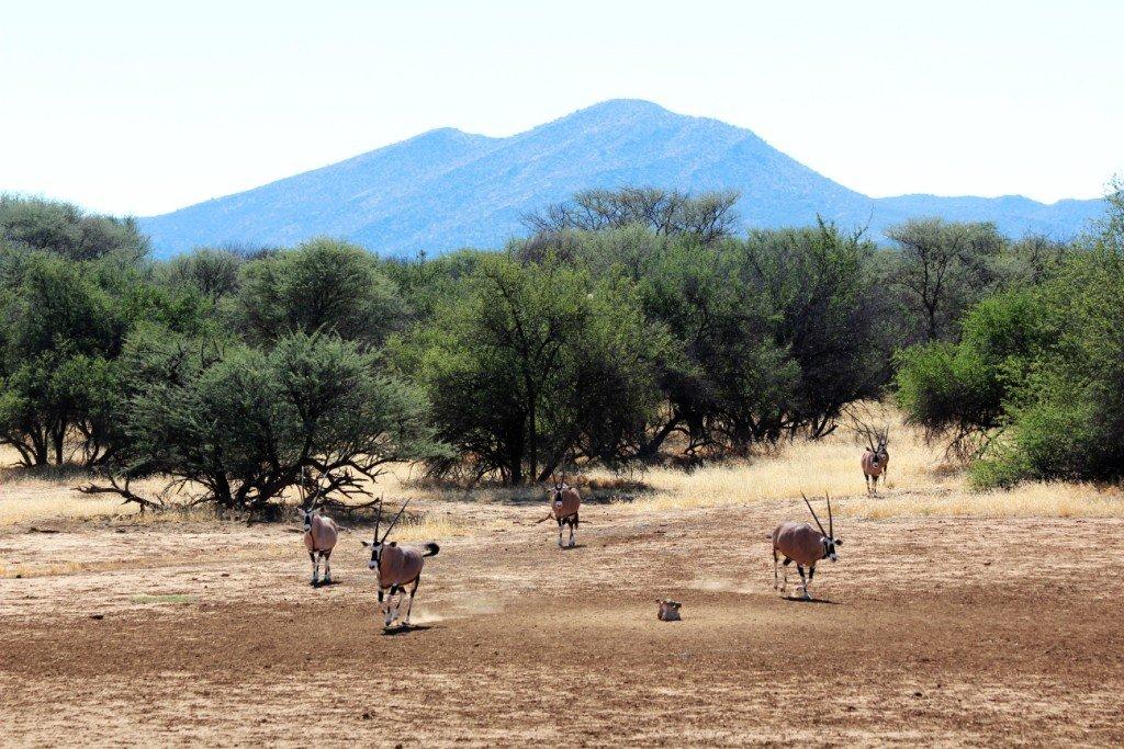 Namibia Haasenhof Gästefarm Farmgelände Iwanowskis Reisen - afrika.de
