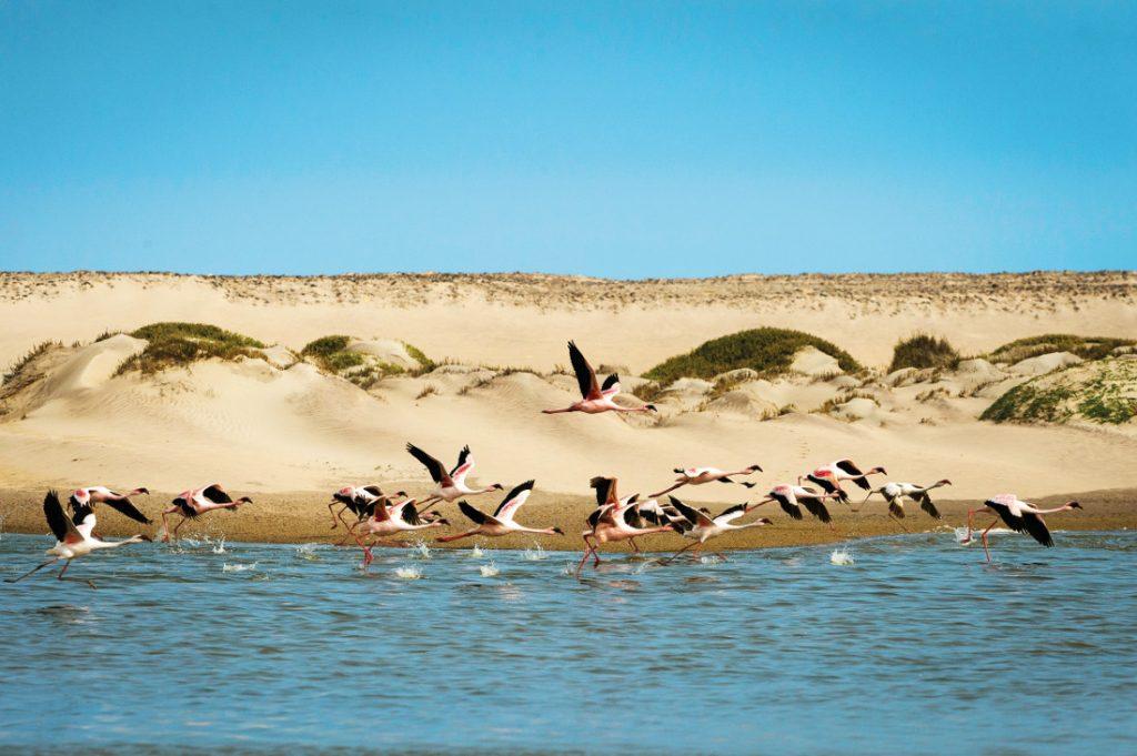 Namibia Kaokoveld Hoanib Skeleton Coast Flamingos Iwanowskis Reisen - afrika.de