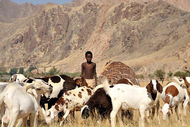 Namibia Kaokoveld Expedition Himba mit Ziegenherde Iwanowskis Reisen - afrika.de