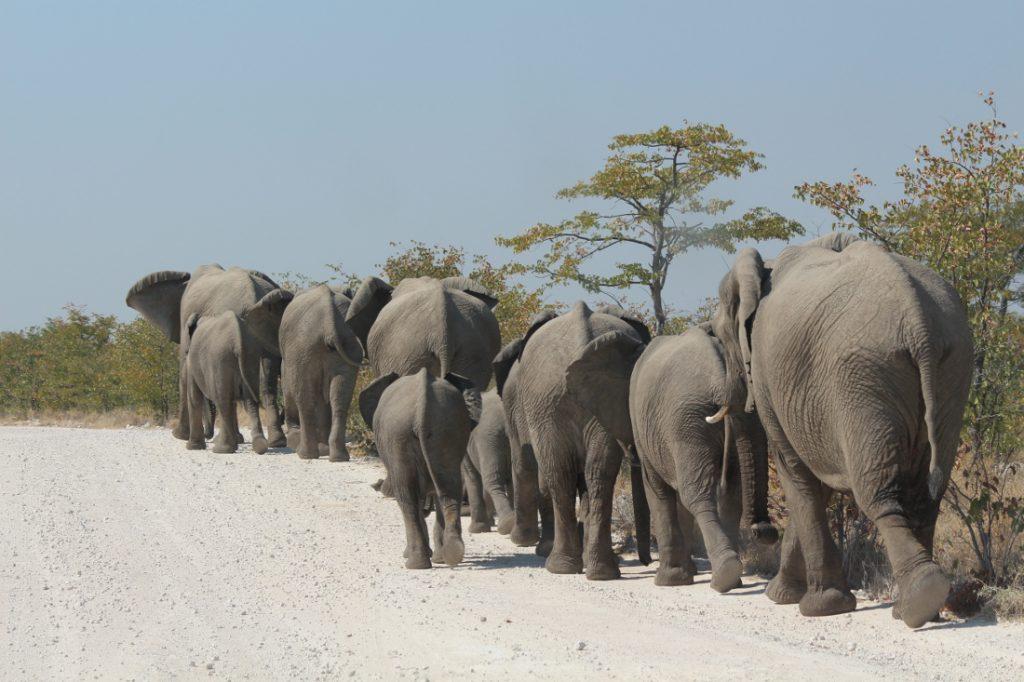 Namibia Mahangu National Park Elefanten Iwanowskis Reisen - afrika.de