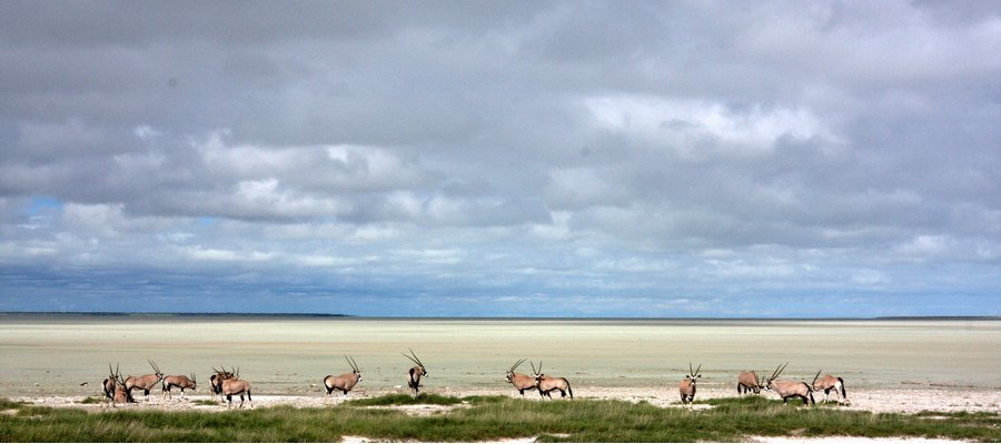 Namibia Mokuti Etosha Lodge Landschaft Iwanowskis Reisen - afrika.de