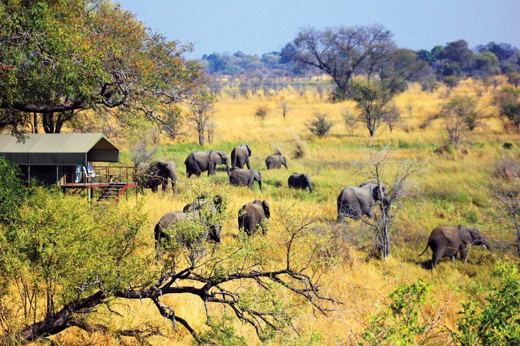 Namibia Ostcarprivi Mamili National Park Nkasa Lupala Lodge Zeltunterkunft Iwanowskis Reisen - afrika.de