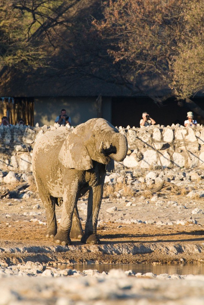 Namibia Etosha Nationalpark Okaukuejo Camp Elefant am Wasserloch Iwanowskis Reisen - afrika.de