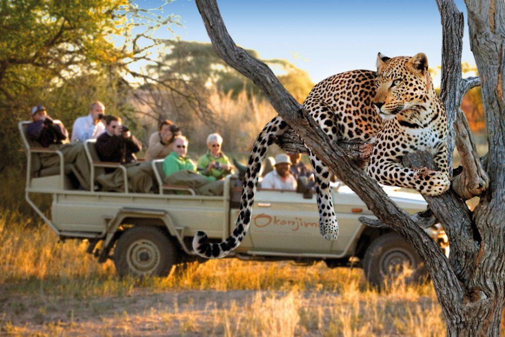 Namibia Okonjima Plains Camp AfriCat Foundation Leopard Iwanowskis Reisen - afrika.de
