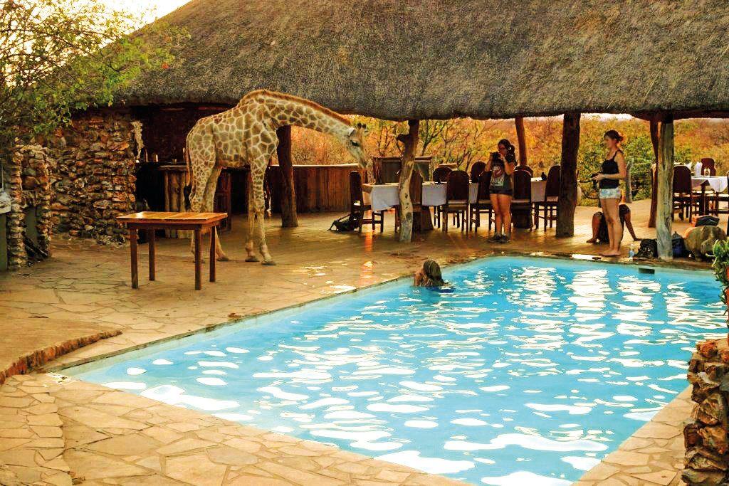 Namibia Etosha Okutala Lodge Pool Iwanowskis Reisen - afrika.de