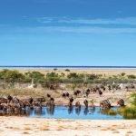 Namibia Etosha Nationalpark Onguma Bush Camp Wasserloch Iwanowskis Reisen - afrika.de