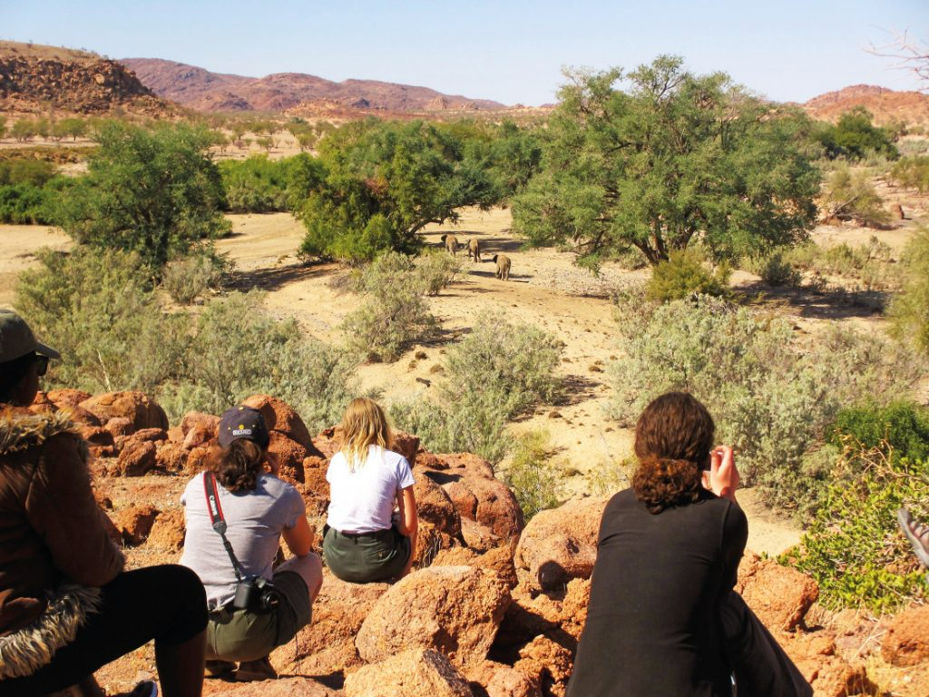 Namibia Ugab Fluss Ozondjou Trails Elefanten Tracking Iwanowskis Reisen - afrika.de
