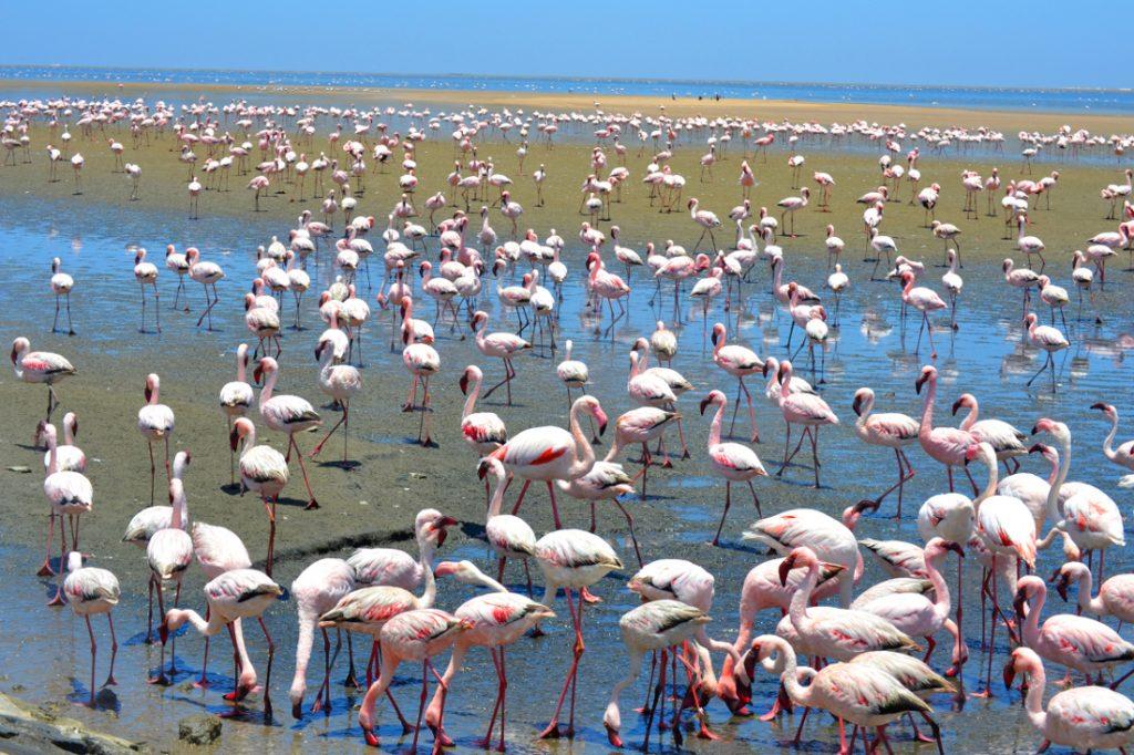 Namibia Swakopmund Sandwich Harbour Tour Flamingos Iwanowskis Reisen - afrika.de