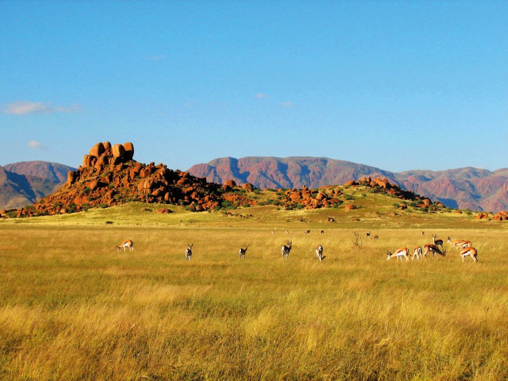Namibia Brandberg Springböcke Sunway Safari Iwanowskis Reisen - afrika.de