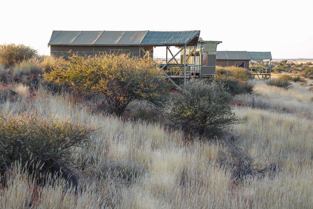 Namibia Kalahari Teufelskrallen Tented Lodge Iwanowskis Reisen - afrika.de