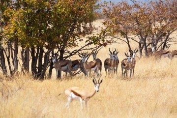 Namibia Etosha Nationalpark Iwanowski's Reisen - afrika.de