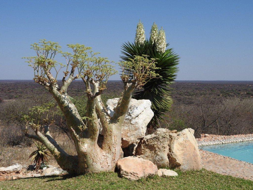 Namibia Otjiwa Mountain Lodge Pool Iwanowski's Reisen - afrika.de