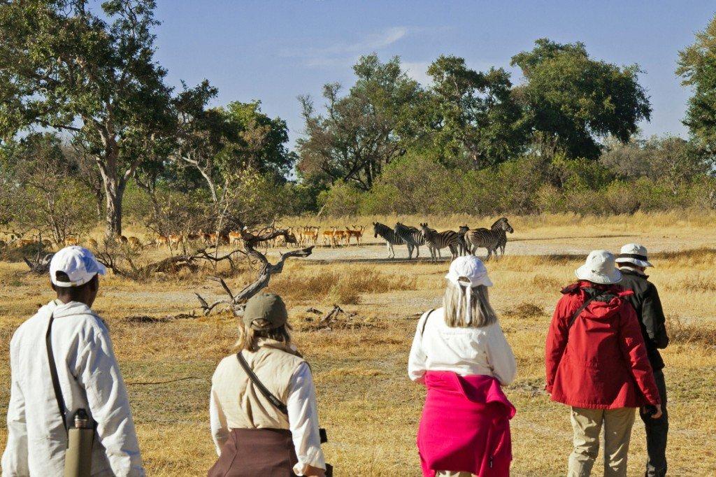 Botswana Oddballs Enclave Fußpirsch Iwanowskis Reisen - afrika.de