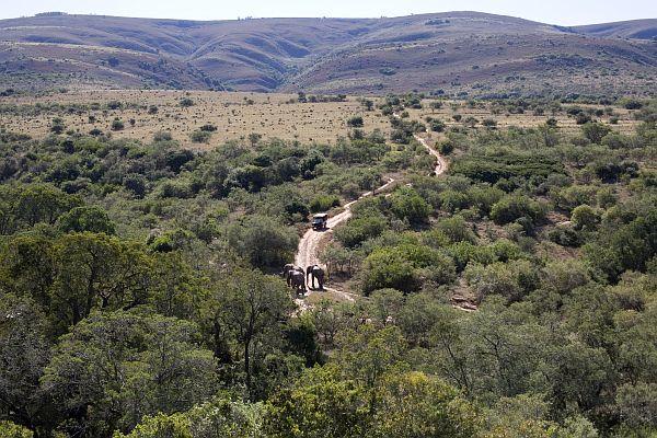 Südafrika Eastern Cape Province Addo Elephant Park Iwanowskis Reisen - afrika.de