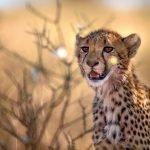 Südafrika Vista: Tiere, Busch, Berge
