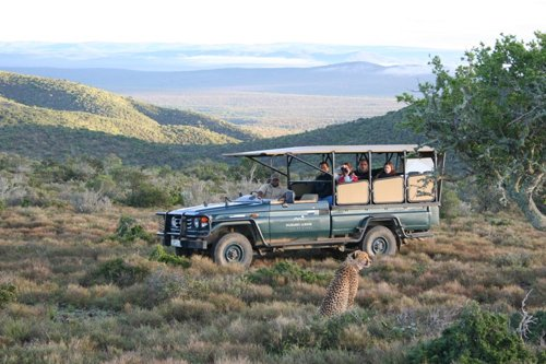 Südafrika Kuzuko Lodge Pirschfahrt