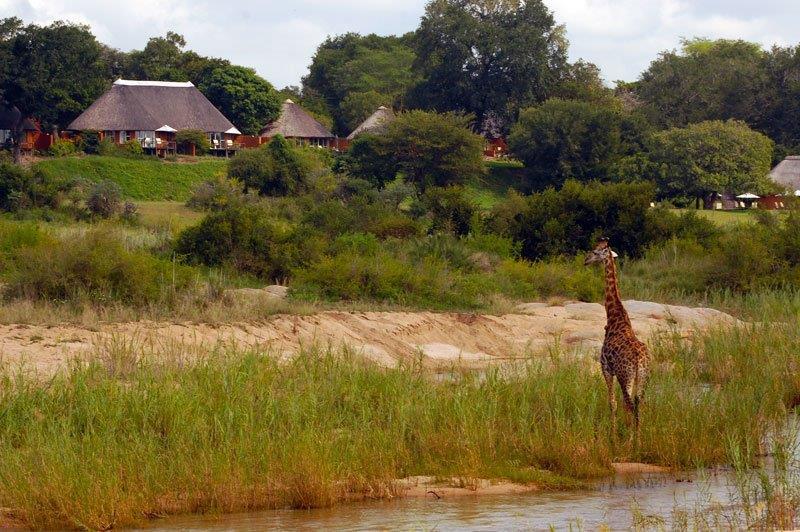 Südafrika Kruger Nationalpark Mala Mala Camp Iwanowskis Reisen - afrika.de