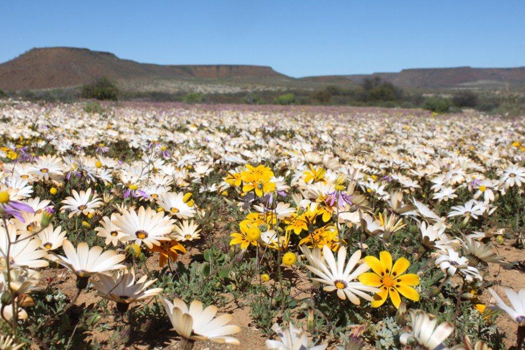 Südafrika Namaqualand