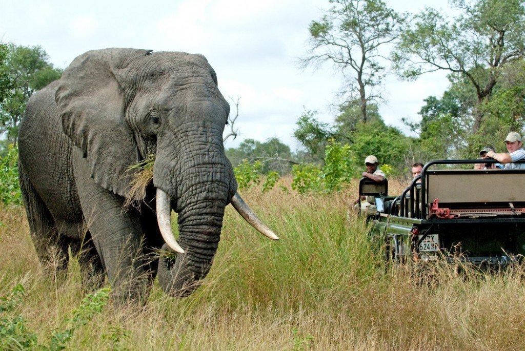 Südafrika Kruger Nationalpark Nottens Bush Camp Pirschfahrt Iwanowskis Reisen - afrika.de