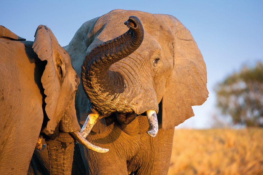 Südafrika Krüger National Park Elefanten Iwanowskis Reisen - afrika.de