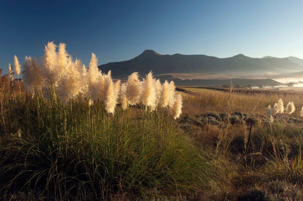 Südafrika Free State Landschaft Iwanowskis Reisen - afrika.de